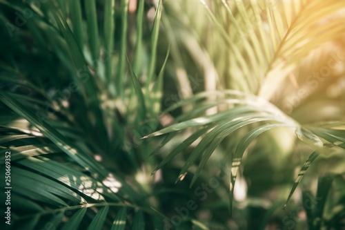 Blurred Tropical green leaf in dark tone. Canvas Print
