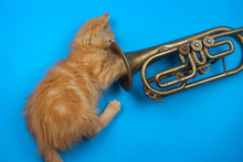 Red Kitten Playing With Golden Trumpet