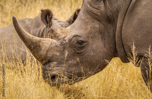 Fotografija  White rhinos of Matopos National Park