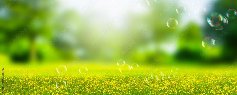 Fototapeta seifenblasen in idyllischer natur