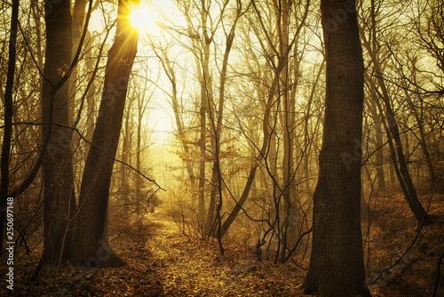 Piękna mglista lasowa ścieżka w ciepłym zmierzchu