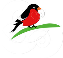 Red And Black Bird Unrolling A...