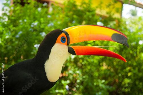 Otwarty dziób tukana ptaka