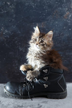 Small Kitten Sitting In The Military Boots