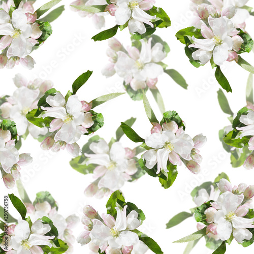Poster Fleuriste Beautiful floral background of Apple flowers. Isolated