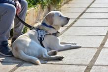 Blind Dog On Duty