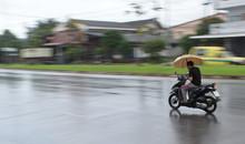 Yala, Thailand, November, 19, ...