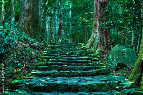 Photo 熊野古道大門坂