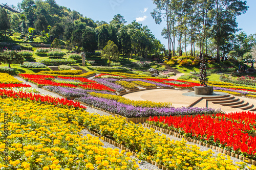 Türaufkleber Gelb Colorful flowers at Mae Fah Luang Garden, Chiang Rai, Thailand. Garden of cold winter flowers such as Salvia Petunia Begonia roses, flowers, auspicious trees, perennials and more than 70 species.