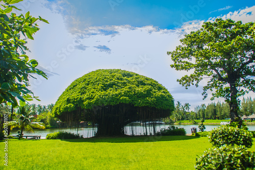 Photo Mushroom shaped banyan tree against green grass field and blue sky background