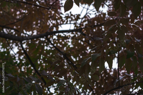 Wall Murals Forest Tree branches in the fall