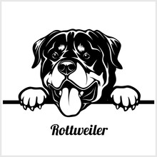 Rottweiler - Peeking Dogs - Br...