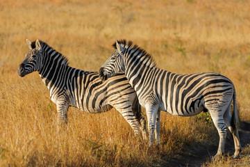 Fototapeta na wymiar KwaZulu Natal. South Africa