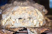 Scary Stuffed Crocodile Head W...