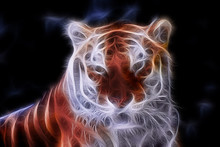 Fractal Color Portrait Of A Wild Tiger On A Contrasting Black Background