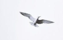 Close Up Of A Seagull In The Sky
