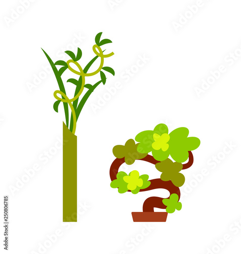 Fototapeta Green plant in vase and small decorative tree, convoluted branches with leaves and winding wood, bright natural symbol