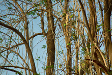 A Flock Of Kramer Parrots Feeds