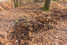 Wildschaden Von Wildschweinen Aufgewühlter Waldboden - Damage Caused By Wild Boar Forest Floor Churned Up By Wild Boars