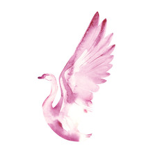 Watercolor Illustration Of A Bird On A White Background. Swan. Watercolor Bird.