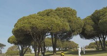 Pest Control Spraying In Pine Tree With Biological Insecticide Against Processionary Worms Plague