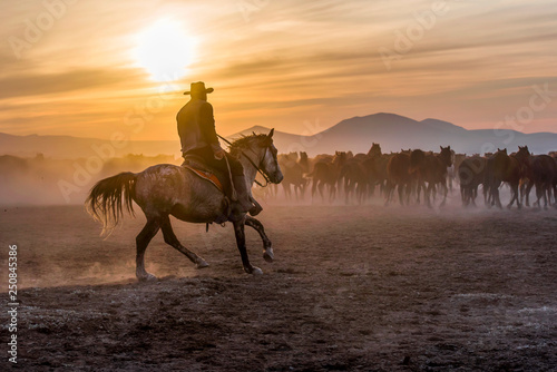 Fotografie, Obraz The cowboy who tamed horses at sunset