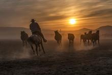 The Cowboy Who Tamed Horses At...