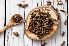 Edible Seasoned Fried Crickets