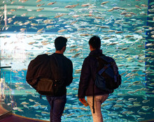 People Looking At The Alewives (Alosa Pseudoharengus) Inside Ripley's Aquarium Of Canada, Toronto, Ontario