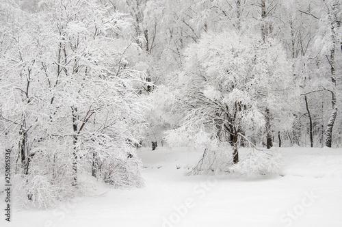 Foto op Aluminium Purper Winter landscape with a park