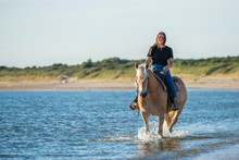 Girl Riding On Haflinger Horse...