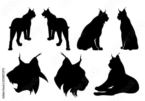 wild lynx cats black vector silhouette set - standing, sitting and roaring anima Fototapeta