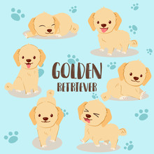 Golden Retriever Pack