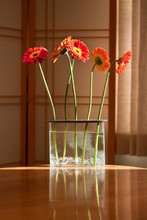 Gerbera Daisies On A Kitchen Table
