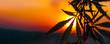 Cannabis commercial grow. Concept of herbal alternative medicine, CBD oil