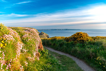 Hiking Path With Flowers And Blue Sky Background In Cornwall, England, UK