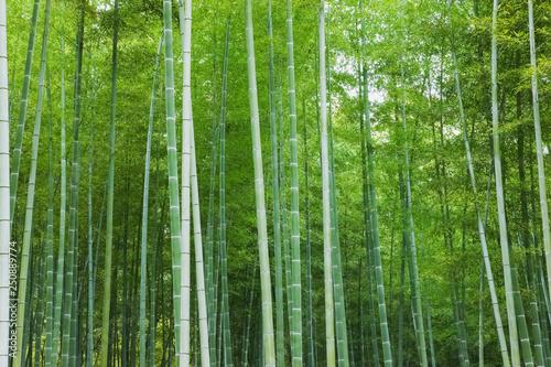 Fototapeten Wald 京都の竹林