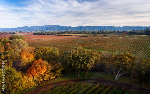 Printed kitchen splashbacks South Africa Landscape in Autumn