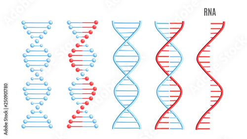 Obraz Vector DNA RNA molecule helix spiral genetic code - fototapety do salonu