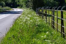Grassy Road Verge