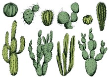 Vector Set Of Green Cactus. Isolated Elements For Design.