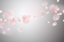 Petals Of Pink Rose Isolated O...