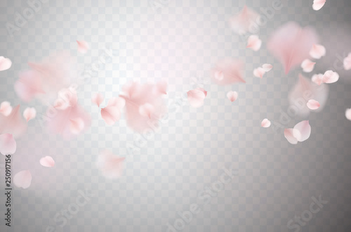 Stampa su Tela Petals of pink rose isolated on transparent background