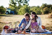 Family Having Picnic In Field ...