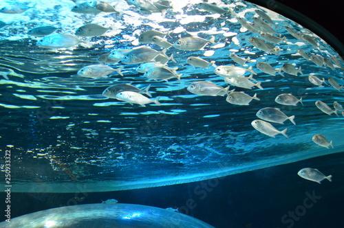 Fotografie, Obraz  peixes no aquário