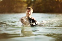 Head Of Dog Swimming In Water