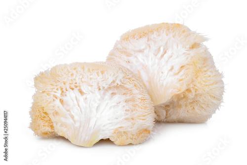 Fotografía  mokey head mushroom , lion mane or yamabushitake isolated on white background