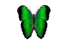 Tropical Green Butterfly. Isolated On White Background