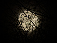 Moon View Through The Branches