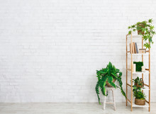 Bookcase With Evergreen Plants Over White Wall